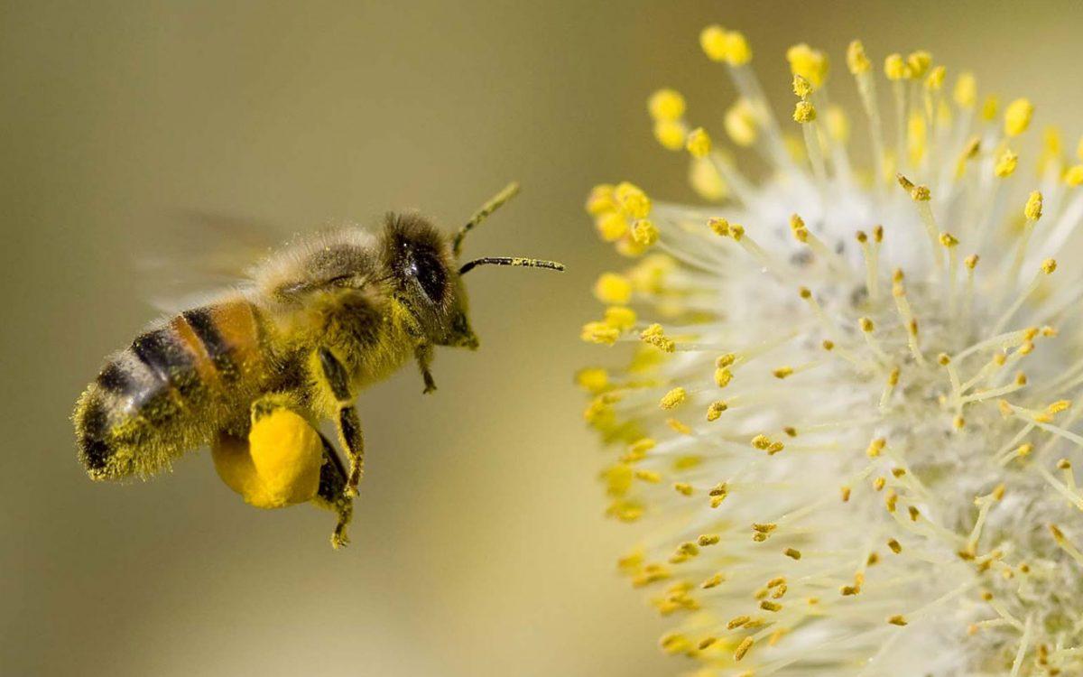 Ngủ mơ thấy con ong đánh đề con gì?