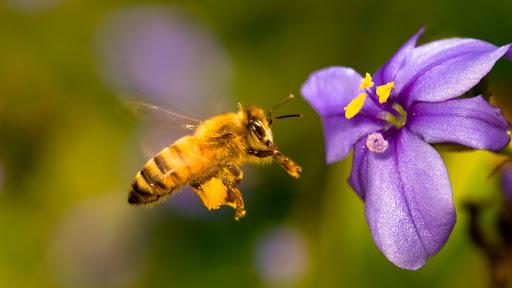 Ý nghĩa giấc mơ thấy ong bắp cày