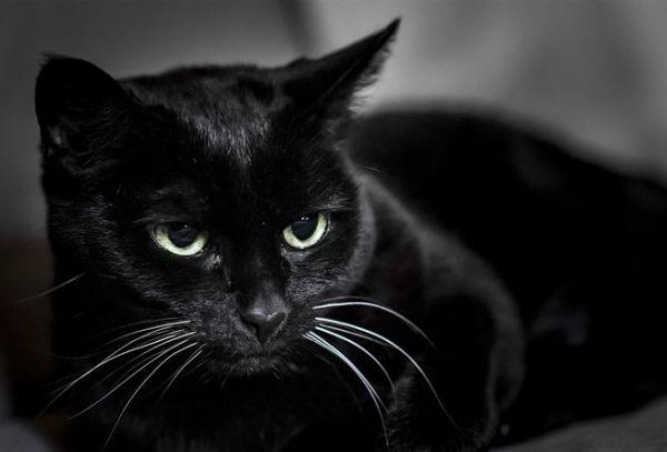 Ngủ mơ thấy mèo đen đánh số mấy – Mơ mèo đen có ý nghĩa tốt hay xấu?