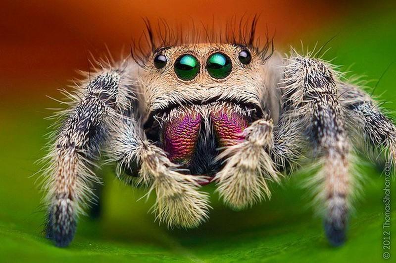 Nằm mơ thấy con nhện tốt hay xấu, đánh lô đề bao nhiêu