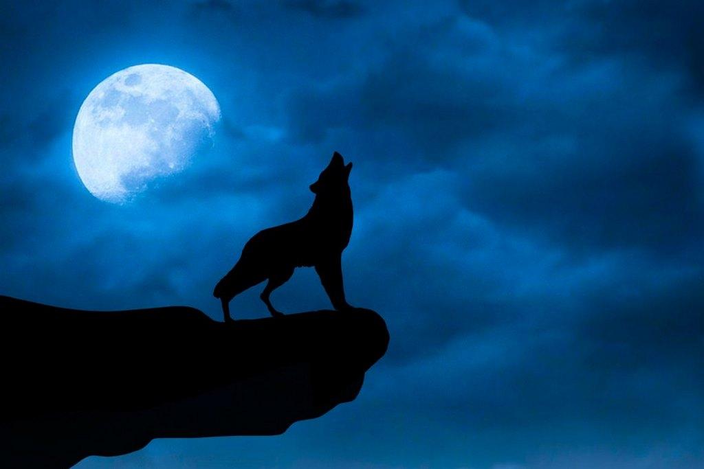 Những giấc mơ thấy con sói là điềm báo tốt hay xấu ?