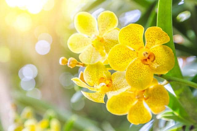 Nằm mơ thấy hoa lan điềm báo gì, lành hay dữ?