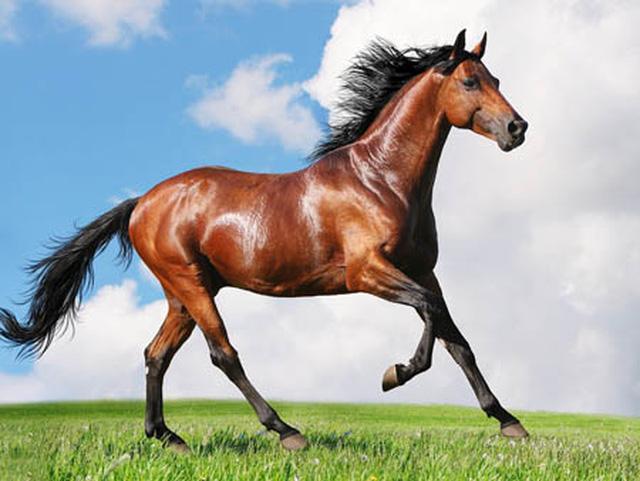 Giải mã: Nằm mơ thấy trộm ngựa có ý nghĩa tốt hay xấu?