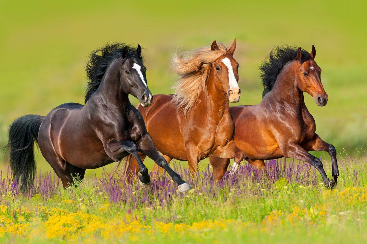 Nằm mơ thấy con ngựa đánh nhau có ý nghĩa gì?