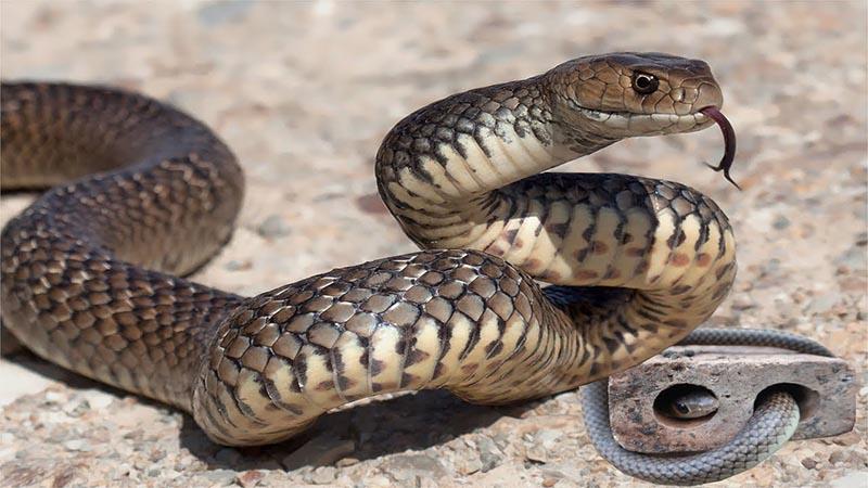 Nằm mơ thấy bị rắn rượt đuổi có ý nghĩa gì? Tốt hay xấu?