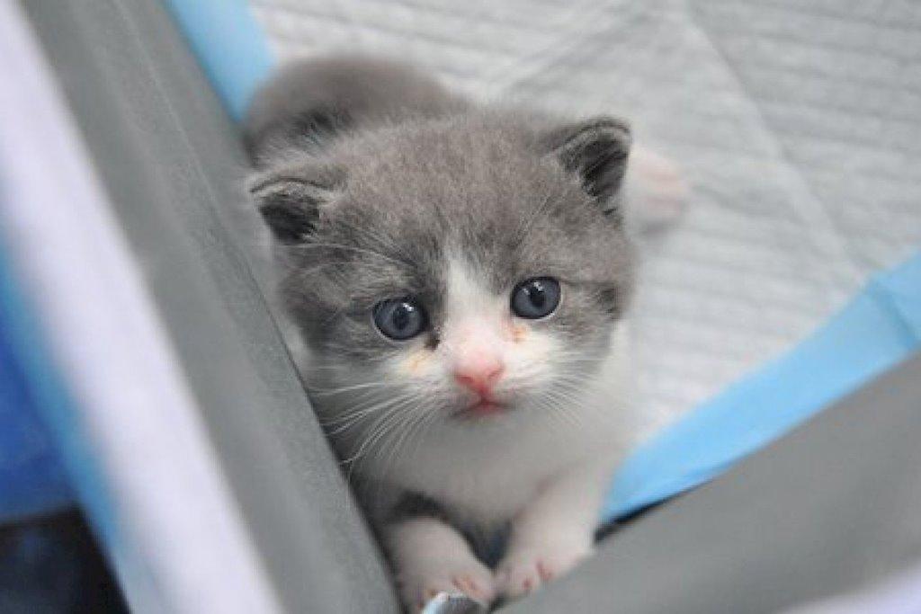 Những giấc mơ thấy con mèo đuổi theo là điềm báo gì?